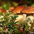 Рожденные в спорах: любопытные факты о грибах
