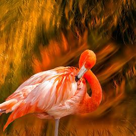 Happy Flamingo by Joan Sharp - Digital Art Animals ( orange, digital art, orangess, preening, flamingo,  )