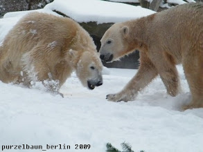 Photo: Gianna ist aber auch gut drauf, findet Knut :-)