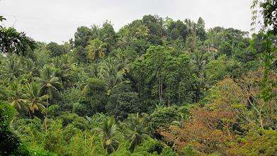 Photo: Botanical Gardens - Peradeniya