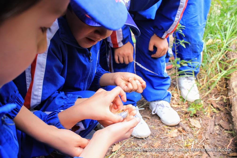 Taller insectos en los humedales
