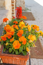 Photo: Pot of flowers at Camiano Piccolo