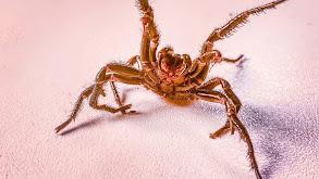 Arachnophobic Nightmares thumbnail