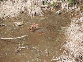 カエルの産卵場