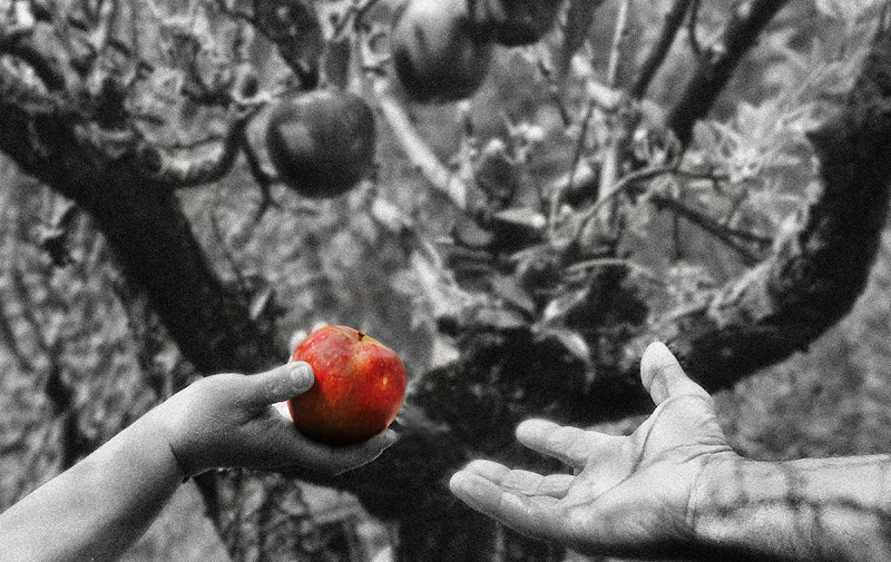 Il frutto del peccato di Moreno re