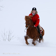 Photo: Riding in the snow on an Icelandic horse, a very strong and robust horse race