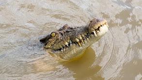 Big Croc Diaries thumbnail