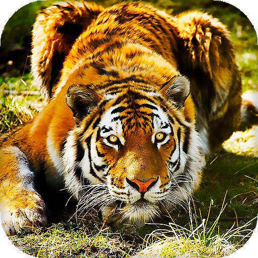 Fantastis 11+ Wallpaper Android Harimau
