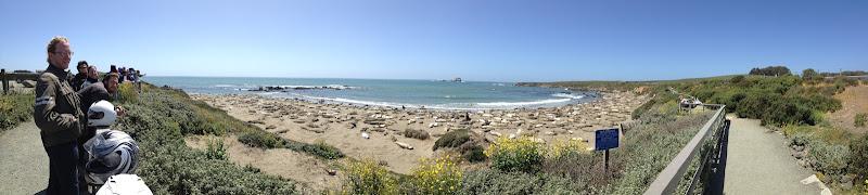 Photo: We found elephant seals! Oh god, so many elephant seals!