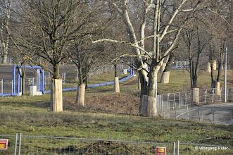 """Photo: Natur und Tierwelt haben in Stuttgart keine Chance: Das mit """"Füßen getretene"""", mit Rohren durchzogene und für S21-Bauzwecke entwittmete, eingezäunte Landschaftsschutzgebiet FFH Rosensteinpark an der Ehmannstraße"""