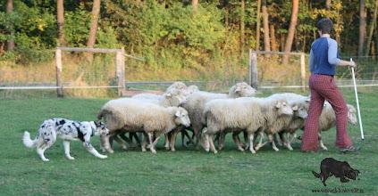 Photo: 5,5 months sheepherding training by Luky Vaňourek
