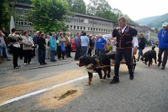 Photo: Berner Sennenhunde sind auch dabei