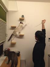 Photo: ネコステップで遊ぶ2ニャン。