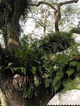 Photo: P7140023 SINGAPUR czy to miasto czy las tropijkalny