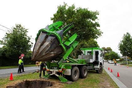 Những việc cần làm khi di dời cây tại Bình Dương