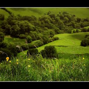 Something Beginning With G by Nigel Finn - Landscapes Prairies, Meadows & Fields ( hill, buttercups, grass, green, eggardon, fields, dorset )