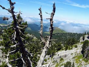 Photo: Verso Pas de l'Osque, tra pini scheletrici e rocce bianche...
