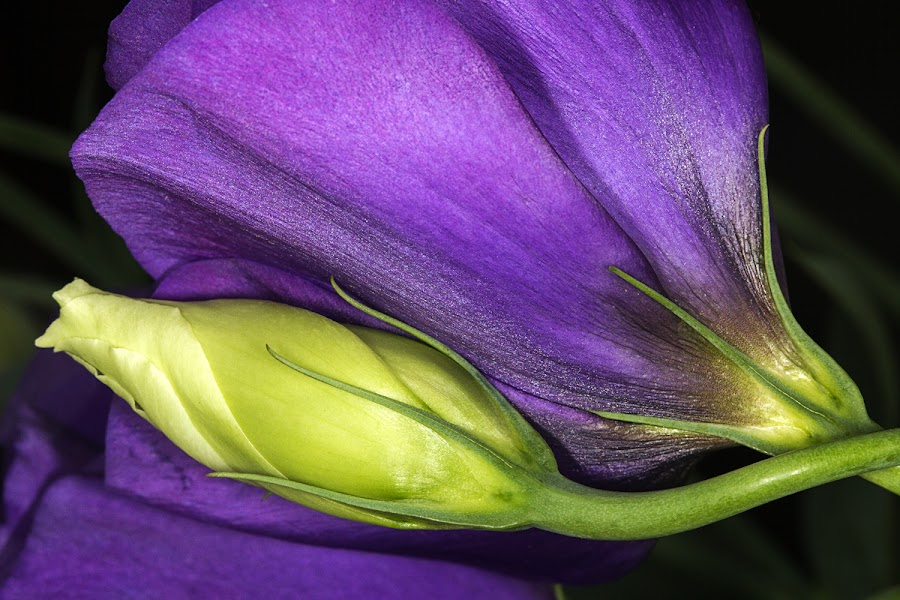by Pejuta Grünstein - Nature Up Close Flowers - 2011-2013