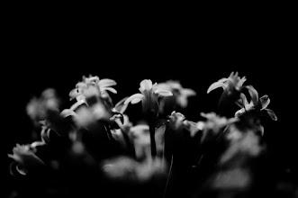 Photo: goodnight  #flowerphotography  #flowers  #monochromeartyclub  #bwphotography