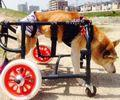 C:UsersuserDesktopTomomi2カット済み中型犬L4輪521.jpg
