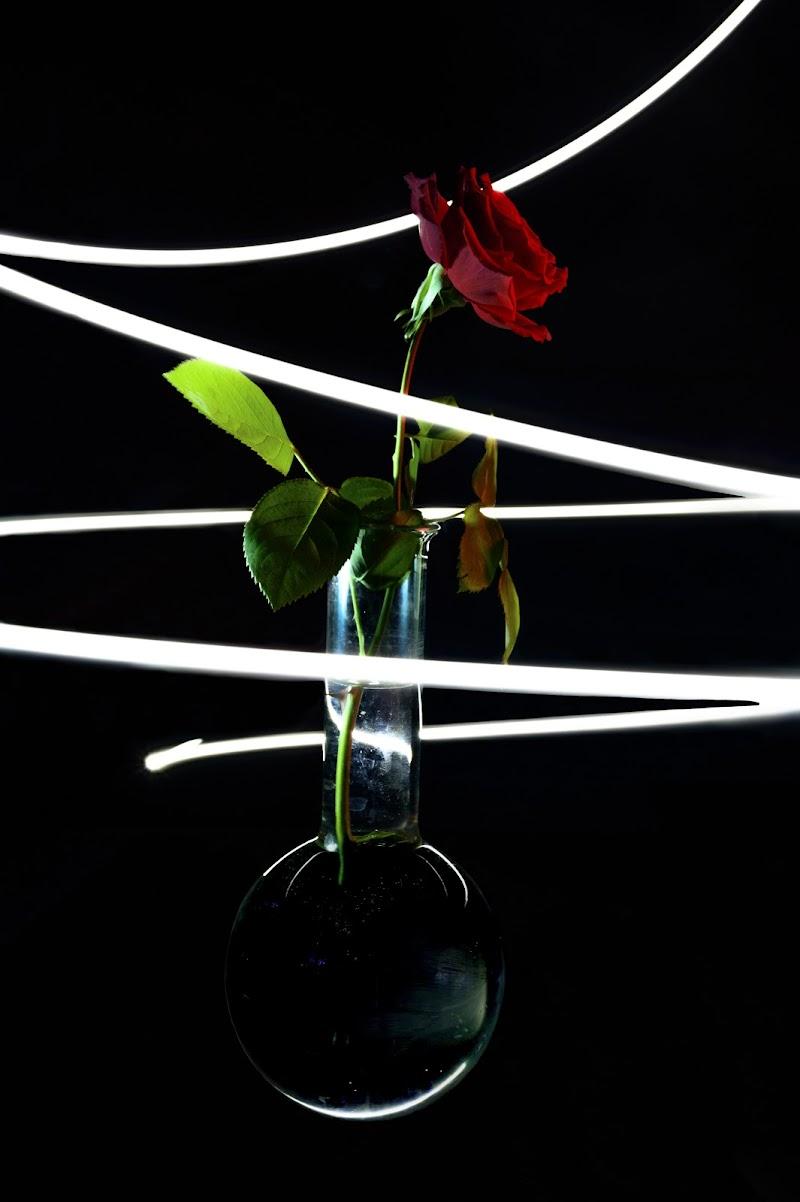 La Rosa Incantata di fernadanze