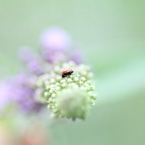 alone with me by Stefano De Maio Fotografia - Flowers Flowers in the Wild ( macro, bugs, nature, colors, insect )