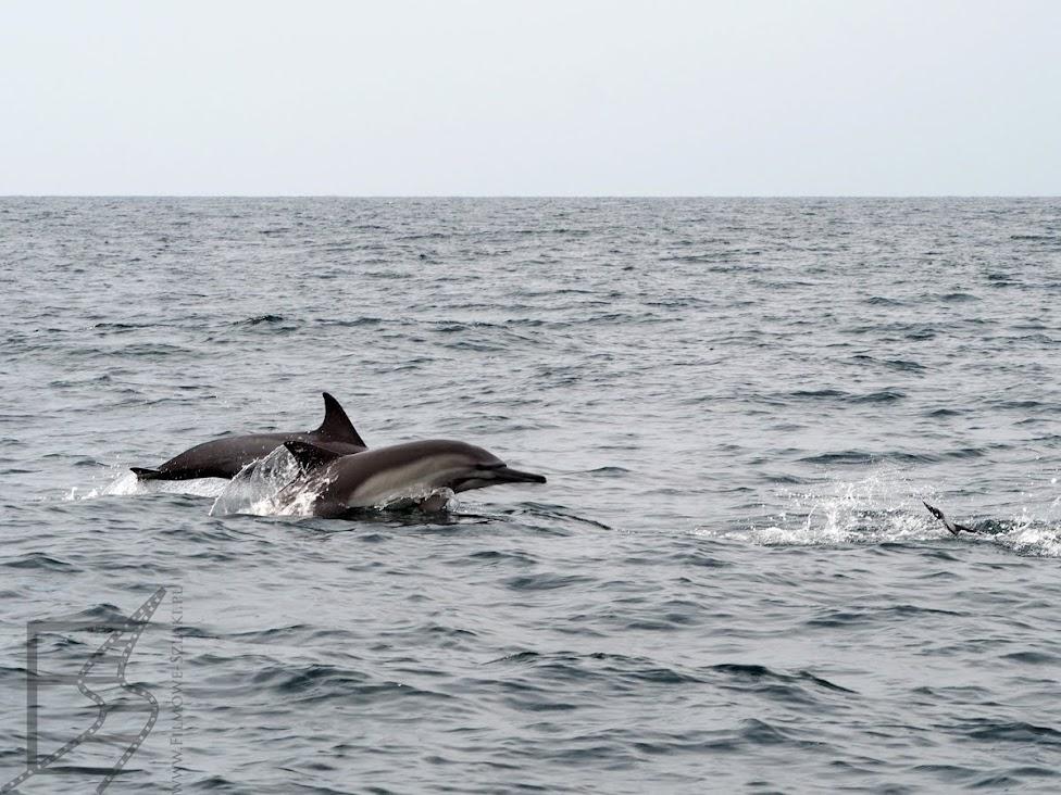 Natalia i Łukasz, filmowe-szlaki.pl, relacja z Omanu, Oman, delfiny