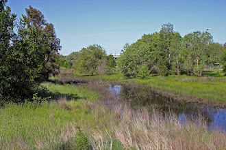 Photo: Toad Hollow (Core) Pond - view to west