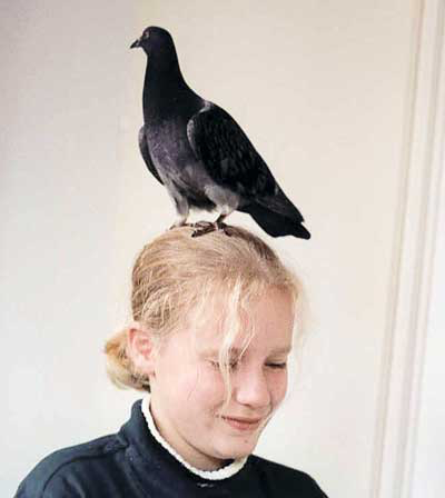 The human/avian bond can occur with common birds, such as pigeons