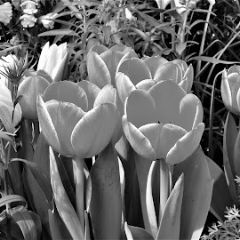 by Allen Wright - Black & White Flowers & Plants