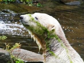 Photo: Knut ist nun auch in gruen-weiss unterwegs ;-)