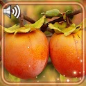 Fruits Summer Live Wallpaper icon