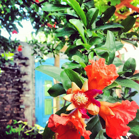Red Beauty by Gianna Baker - Instagram & Mobile Android ( tree, simple, door, beauty, flower )