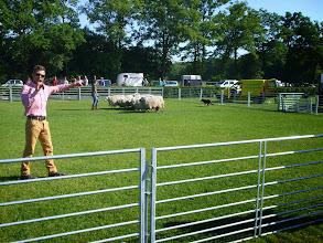 Photo: Demonstratie schapen drijven met een border collie.
