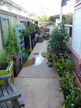 Photo: Much of the garden is only 7 feet wide.