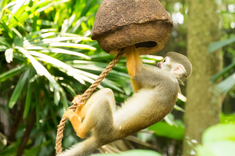 Singapore River Safari Squirrel Monkey Forest3
