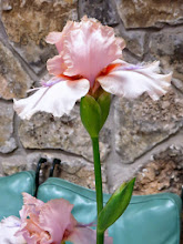 Photo: Best Pink - 'Elegant Girl' - Marney Abel