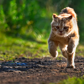 I'm Running, not skulking.. by Teguh Hariyanto - Animals - Cats Portraits