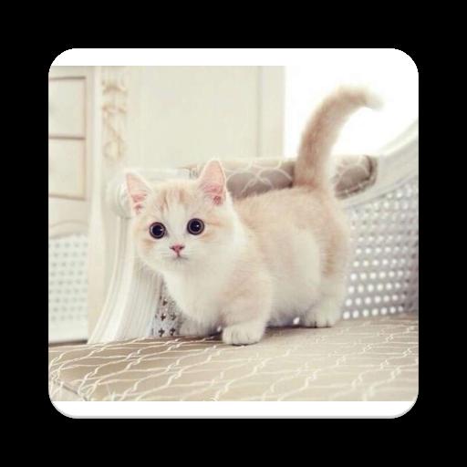 Very Cute Cats (app)
