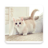 Very cute cats apk download only apk file for android very cute cats voltagebd Gallery