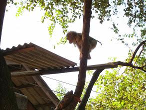 Photo: Pet monkey