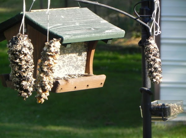 Now, to decide where you will hang your feeders and hang them up for...