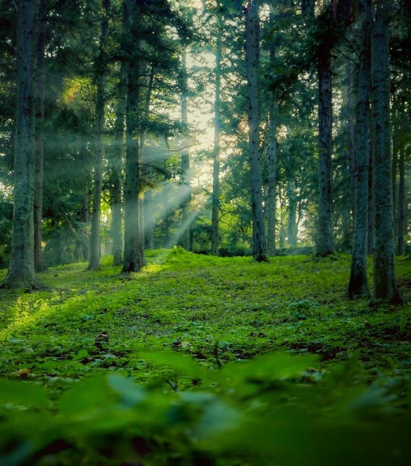 Infiltrazioni boschive  di gnuc