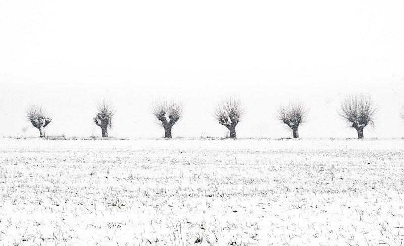 Trees di marina_mangini