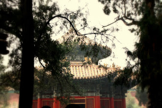 Photo: Day 190 -  In the Garden of  The Forbidden Palace
