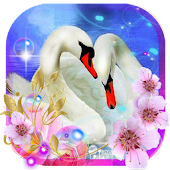 Swans Songs Live Wallpaper Android APK Download Free By SweetMood