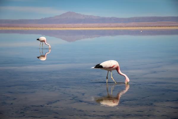Flamingo di vlao