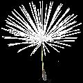 Dandelion Live Wallpaper APK