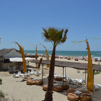 onhotel plage palmier sable de mer