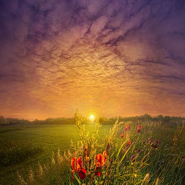 While A Thousand Other Worries Are Floating In The Wind by Phil Koch - Landscapes Sunsets & Sunrises ( country, mood, vertical, clouds, office, scenic, life, colors, weather, lines, meadow, sky, wisconsin, art, emotions, living, journey, portrait, heaven, horizons, morning, horizon, outdoors, field, sunset, dawn, travel, serene, landscape, photography,  )